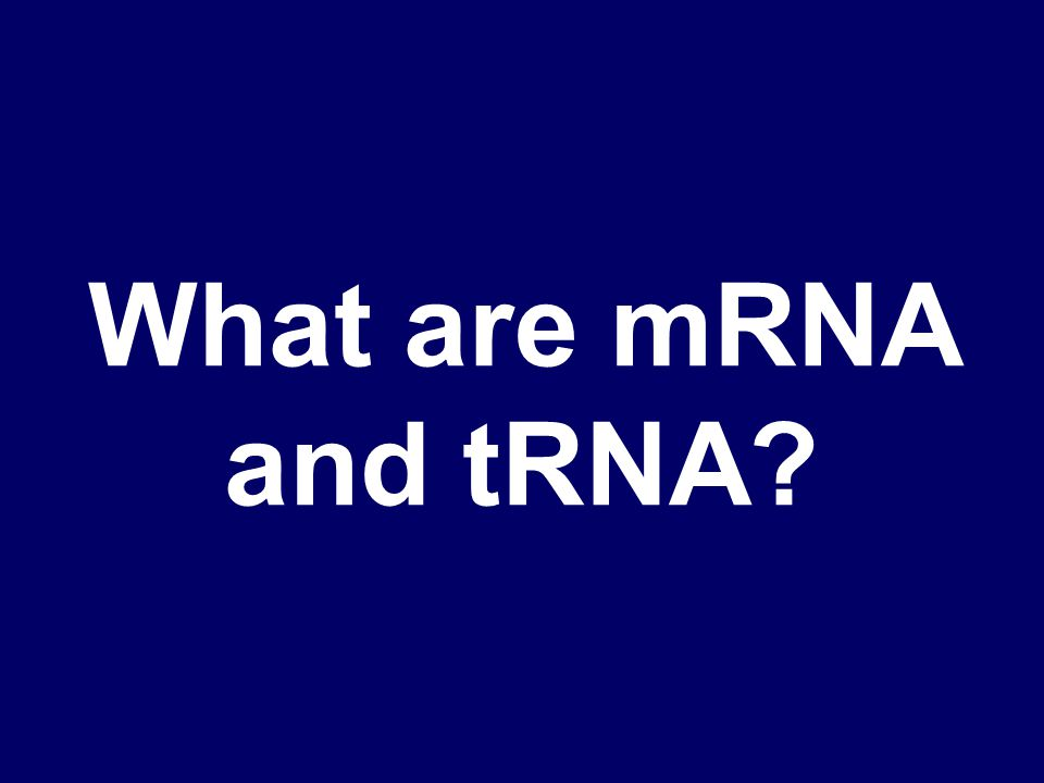 Which rna attaches to the ribosome and which one brings the amino acid