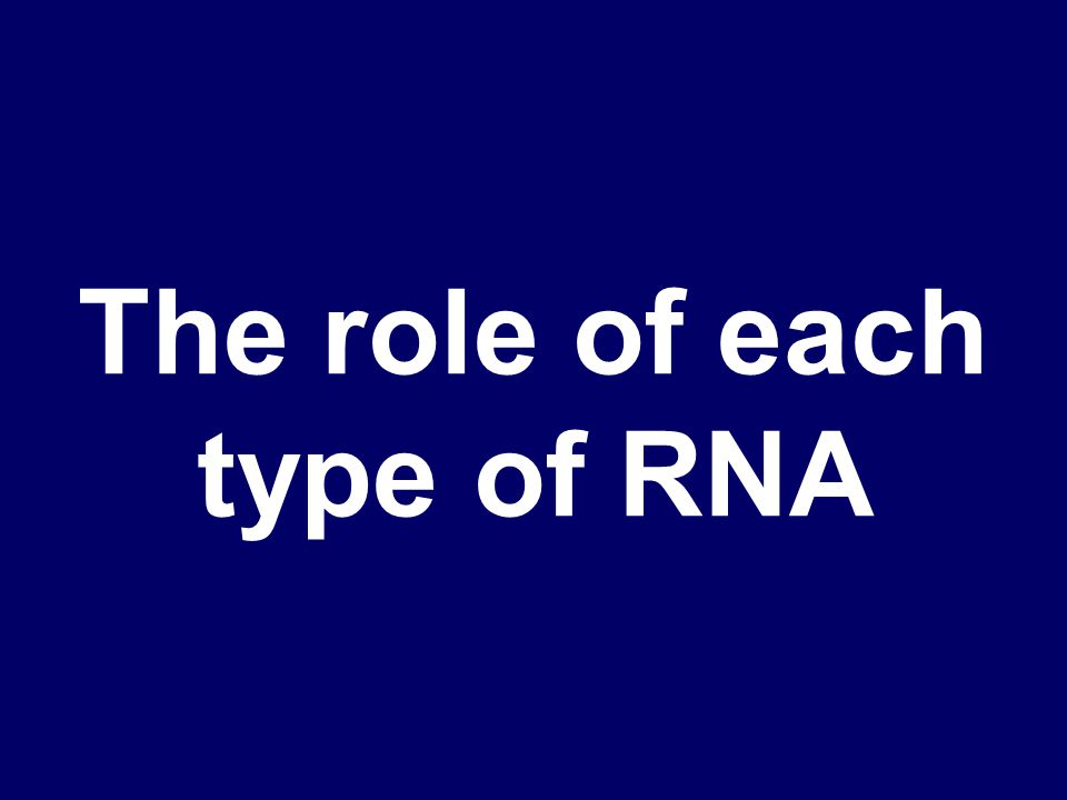 What are mRNA, rRNA, and tRNA