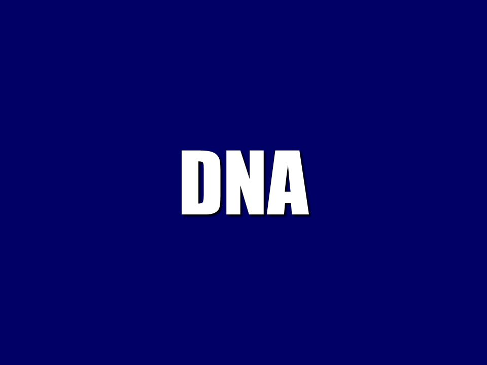 What is DNA polymerase?