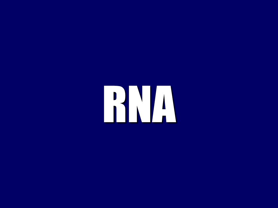 The structure of the RNA molecule