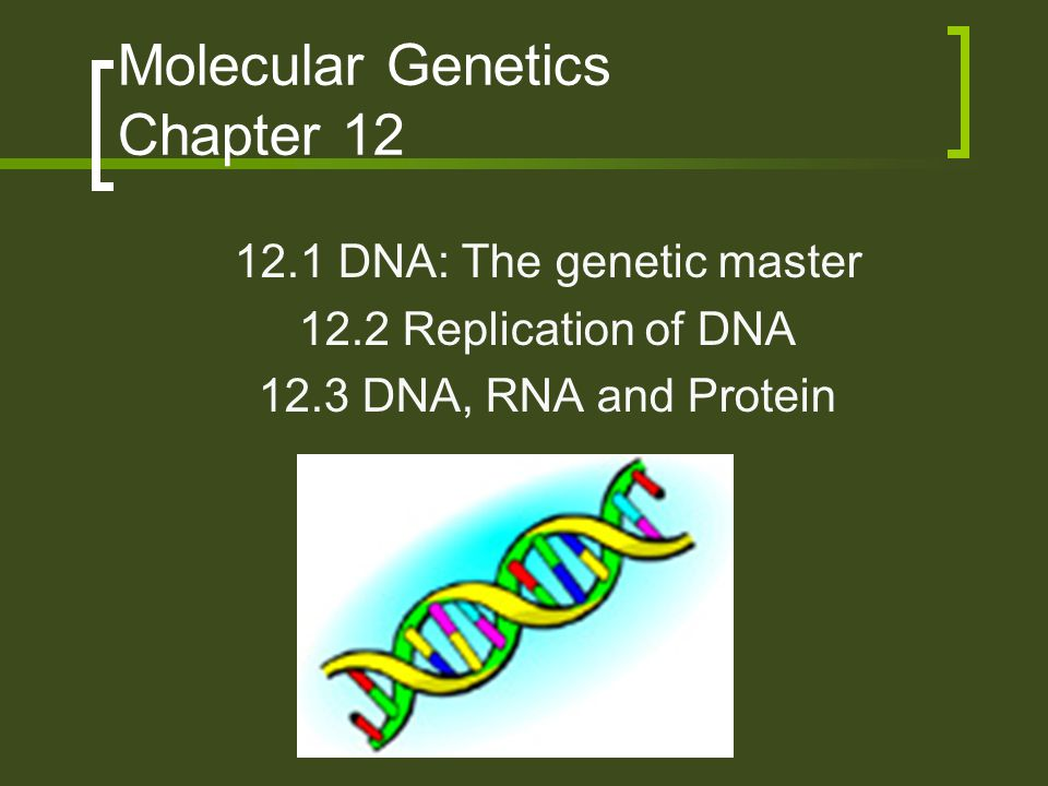 Molecular Genetics Chapter 12 12.1 DNA: The genetic master 12.2 Replication of DNA 12.3 DNA, RNA and Protein