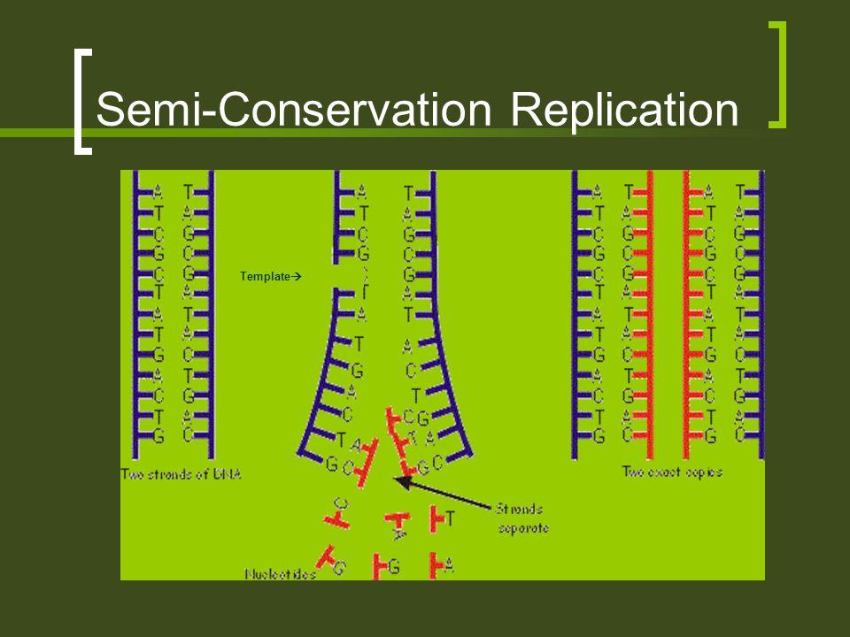 Semi-Conservation Replication Template 