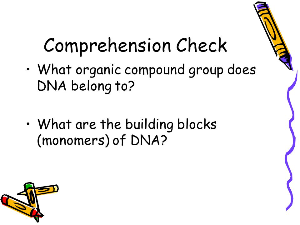 DNA DNA molecules contain four bases: adenine (A), guanine (G), cytosine (C) and thymine (T).