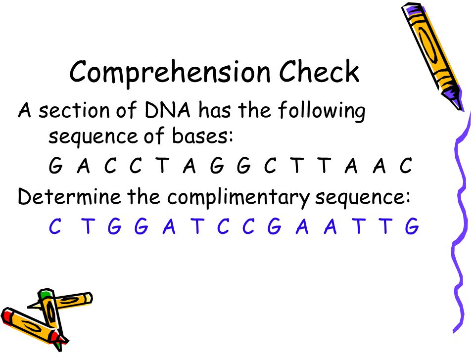 Comprehension Check A section of DNA has the following sequence of bases: G A C C T A G G C T T A A C Determine the complimentary sequence: C T G G A