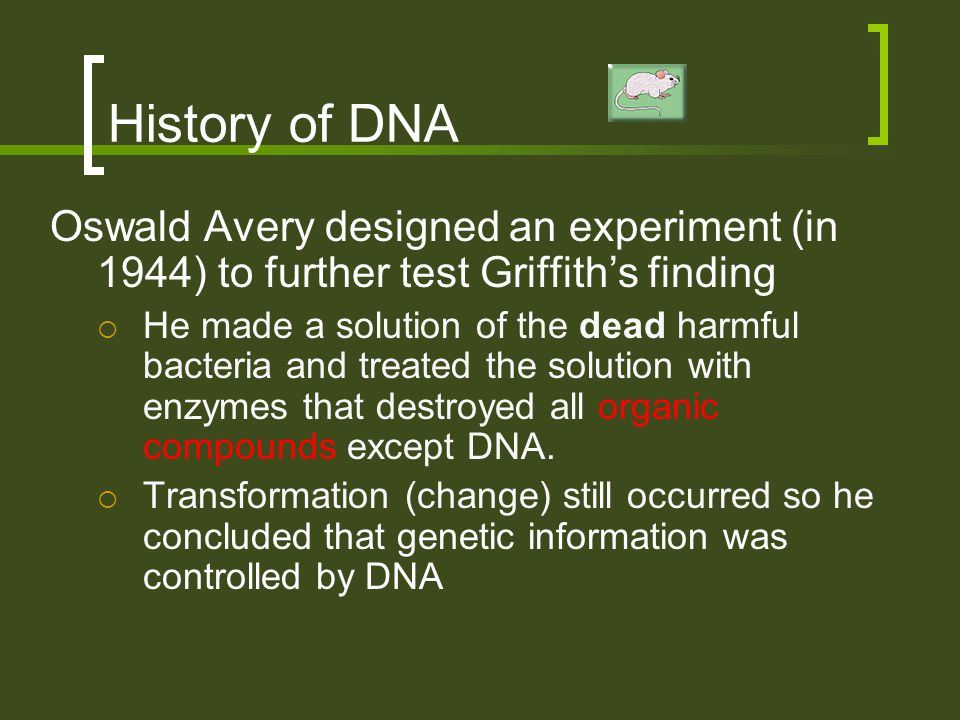History of DNA Oswald Avery designed an experiment (in 1944) to further test Griffith's finding  He made a solution of the dead harmful bacteria and
