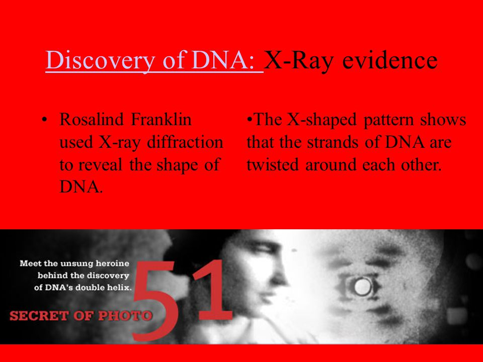Discovery of DNA: Discovery of DNA: X-Ray evidence Rosalind Franklin used X-ray diffraction to reveal the shape of DNA. The X-shaped pattern shows tha