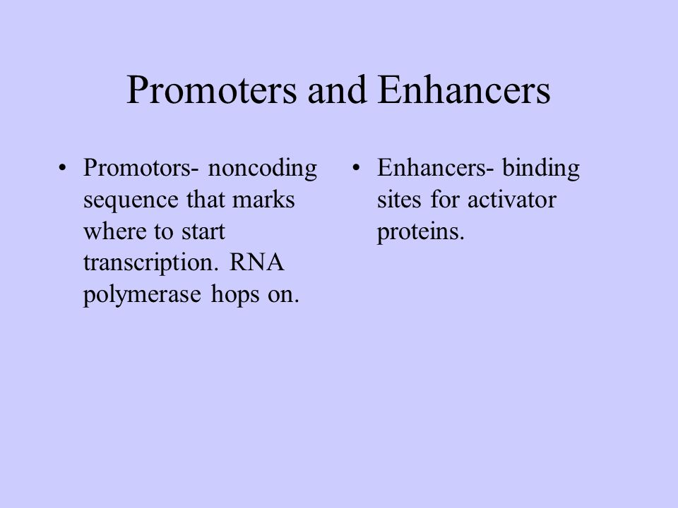 Promoters and Enhancers Promotors- noncoding sequence that marks where to start transcription. RNA polymerase hops on. Enhancers- binding sites for ac