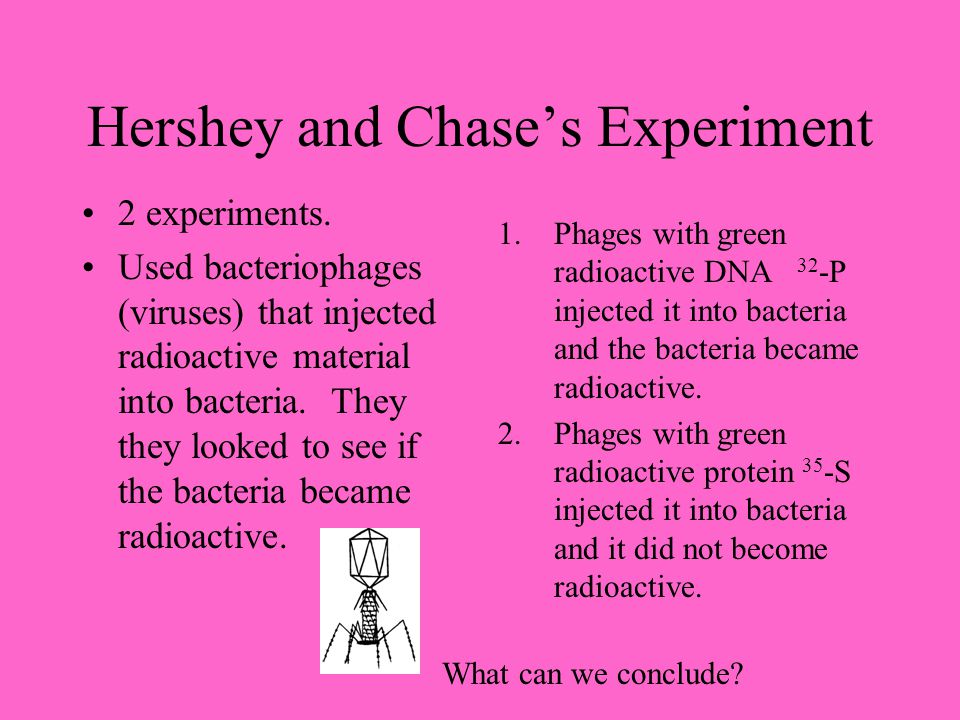 Hershey and Chase's Experiment 2 experiments. Used bacteriophages (viruses) that injected radioactive material into bacteria. They they looked to see