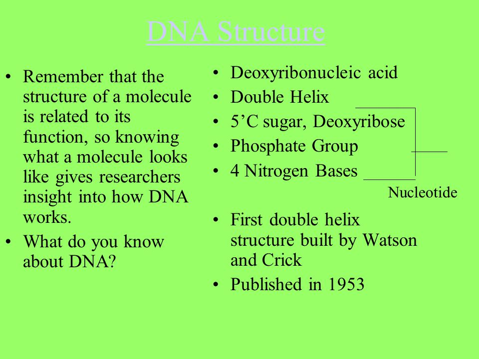 DNA Structure Remember that the structure of a molecule is related to its function, so knowing what a molecule looks like gives researchers insight in