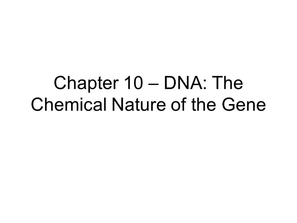 Nucleotide structure Nucleoside –Base + sugar Nucleotide –Nucleoside + phosphate