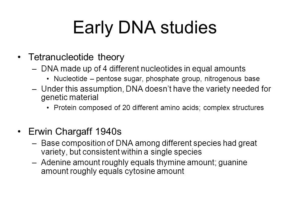 Early DNA studies Tetranucleotide theory –DNA made up of 4 different nucleotides in equal amounts Nucleotide – pentose sugar, phosphate group, nitrogenous base –Under this assumption, DNA doesn't have the variety needed for genetic material Protein composed of 20 different amino acids; complex structures Erwin Chargaff 1940s –Base composition of DNA among different species had great variety, but consistent within a single species –Adenine amount roughly equals thymine amount; guanine amount roughly equals cytosine amount