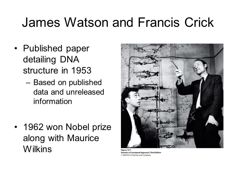 James Watson and Francis Crick Published paper detailing DNA structure in 1953 –Based on published data and unreleased information 1962 won Nobel prize along with Maurice Wilkins