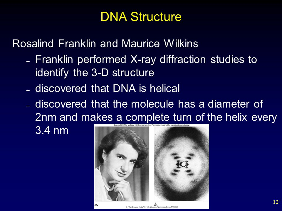 12 DNA Structure Rosalind Franklin and Maurice Wilkins – Franklin performed X-ray diffraction studies to identify the 3-D structure – discovered that DNA is helical – discovered that the molecule has a diameter of 2nm and makes a complete turn of the helix every 3.4 nm