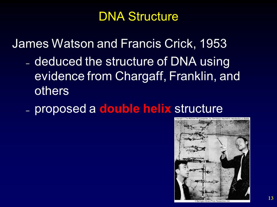 13 DNA Structure James Watson and Francis Crick, 1953 – deduced the structure of DNA using evidence from Chargaff, Franklin, and others – proposed a double helix structure