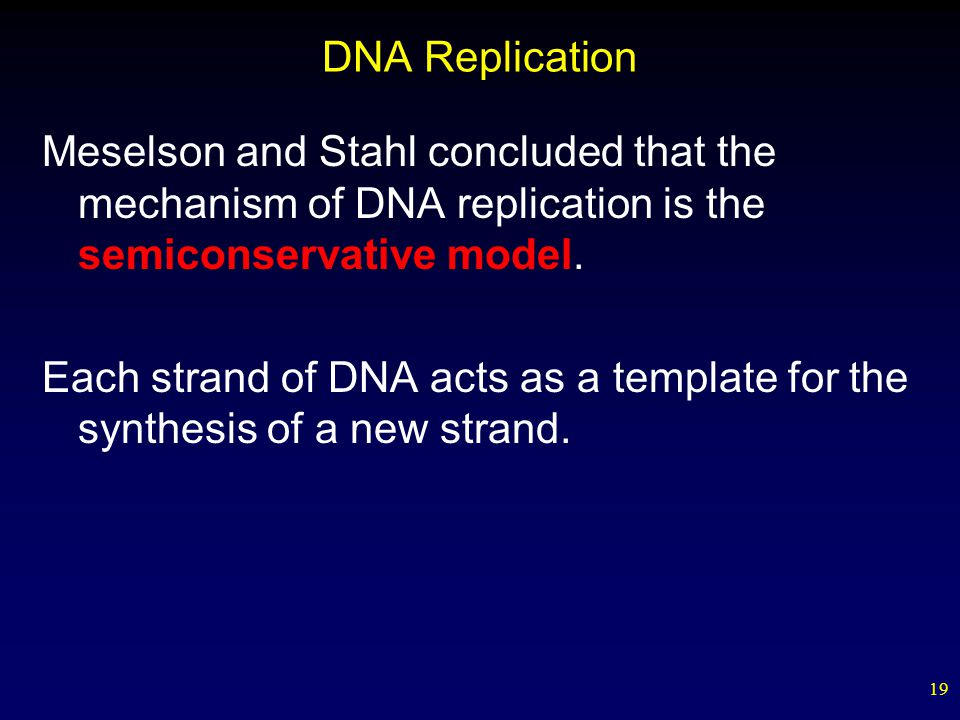 19 DNA Replication Meselson and Stahl concluded that the mechanism of DNA replication is the semiconservative model.