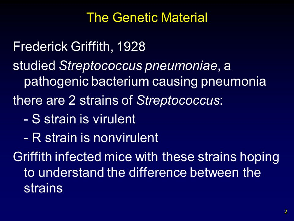 2 The Genetic Material Frederick Griffith, 1928 studied Streptococcus pneumoniae, a pathogenic bacterium causing pneumonia there are 2 strains of Streptococcus: - S strain is virulent - R strain is nonvirulent Griffith infected mice with these strains hoping to understand the difference between the strains