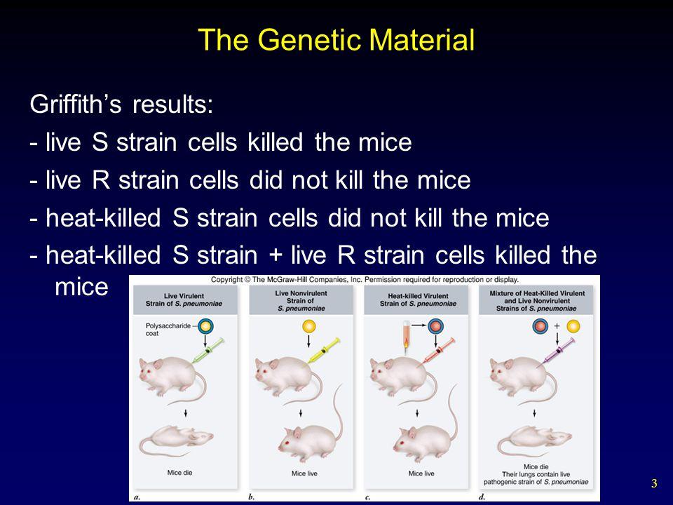 24 Prokaryotic DNA Replication DNA replication is semidiscontinuous.