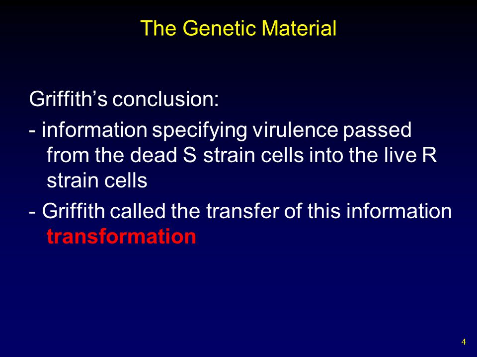 5 The Genetic Material Avery, MacLeod, & McCarty, 1944 repeated Griffith's experiment using purified cell extracts and discovered: - removal of all protein from the transforming material did not destroy its ability to transform R strain cells - DNA-digesting enzymes destroyed all transforming ability - the transforming material is DNA