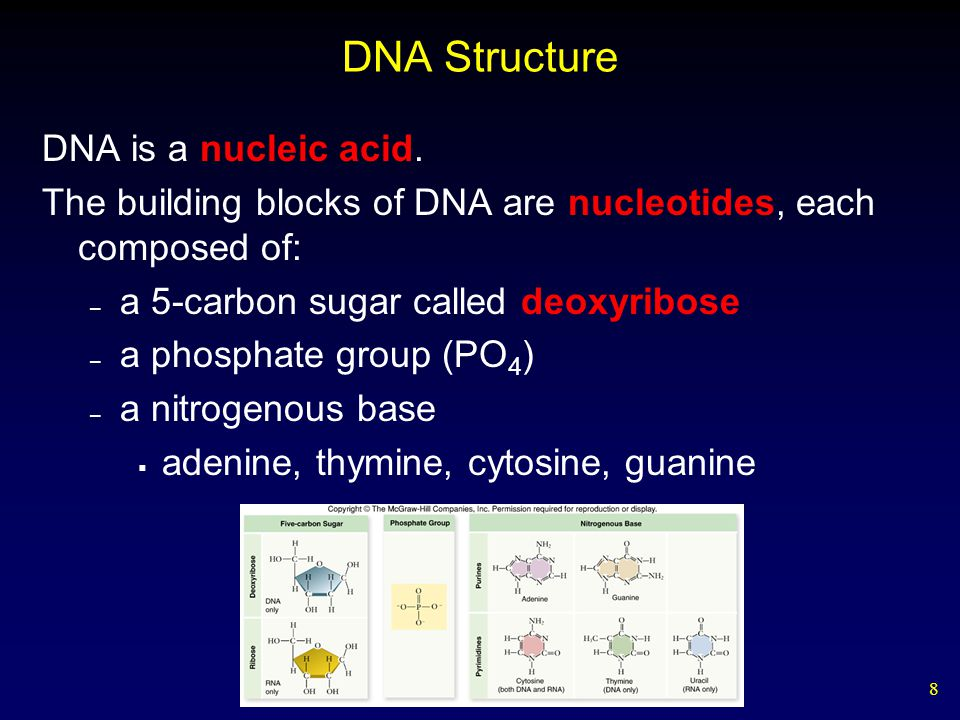 8 DNA Structure DNA is a nucleic acid.