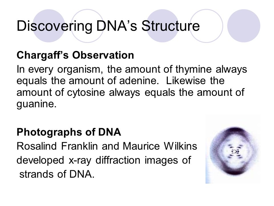 Discovering DNA's Structure, Cont.