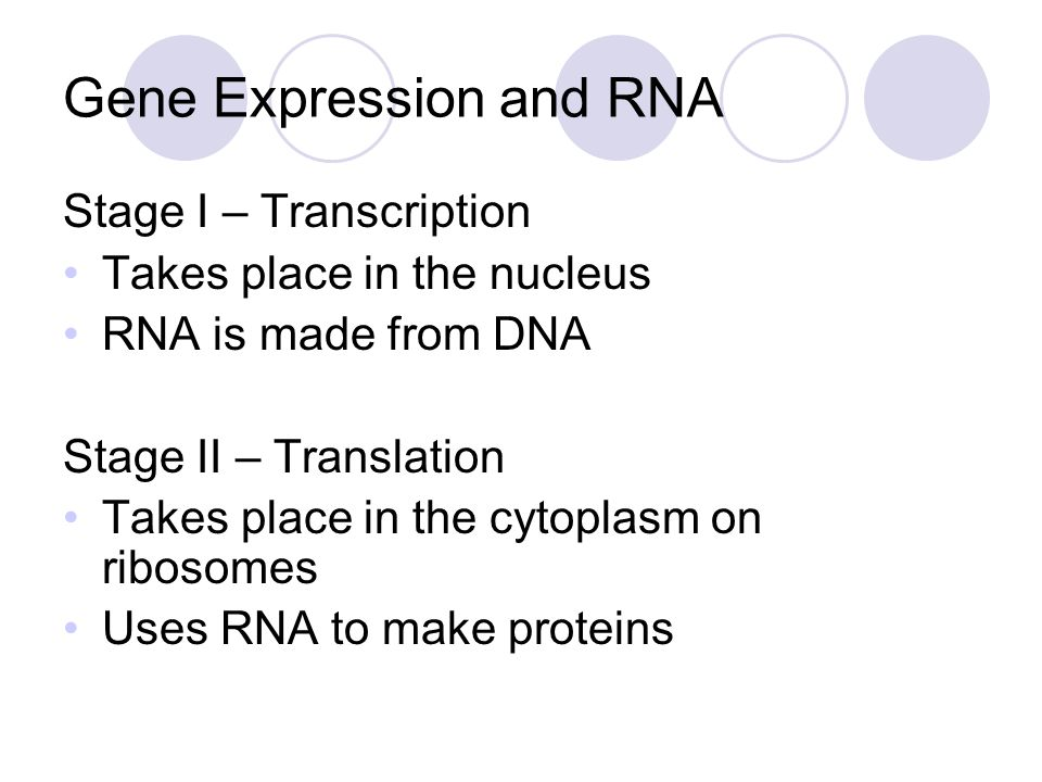 How is RNA different from DNA.