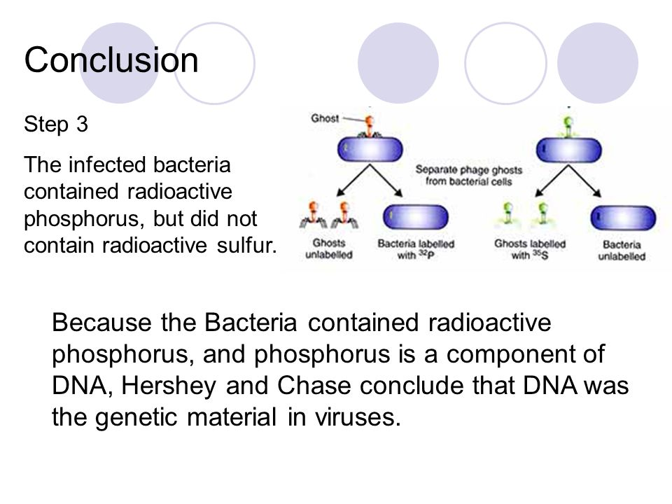 Pre-Class Question 4/28 In the Hershey-Chase experiment, where DNA was found to be the component of bacteriophages responsible for infecting bacteria, what radioactive substance was found in the bacteria?