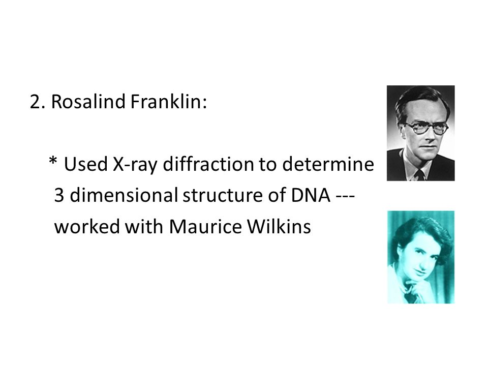 2. Rosalind Franklin: * Used X-ray diffraction to determine 3 dimensional structure of DNA --- worked with Maurice Wilkins
