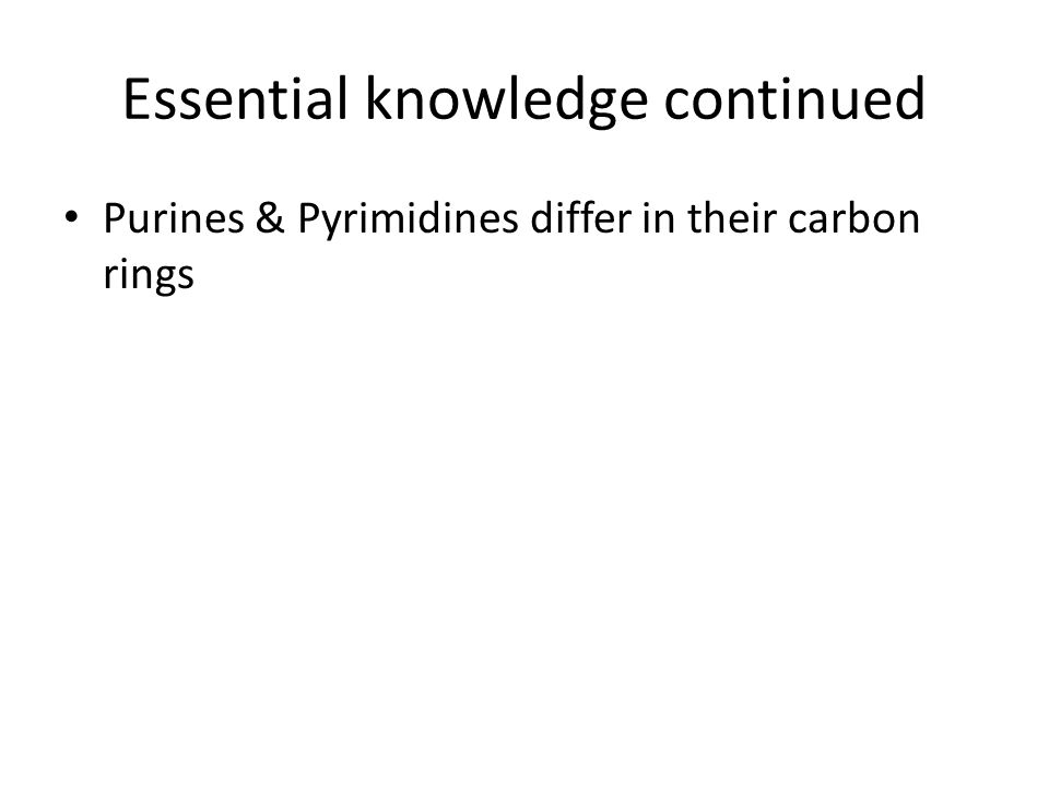 Essential knowledge continued Purines & Pyrimidines differ in their carbon rings