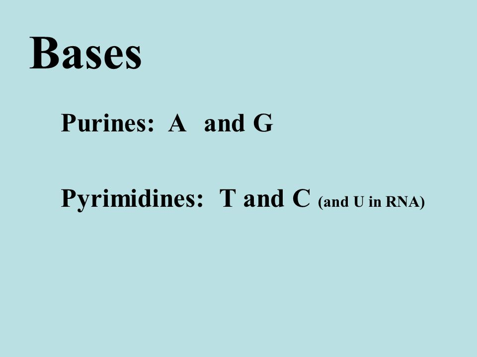 Bases Purines: Aand G Pyrimidines: T and C (and U in RNA)