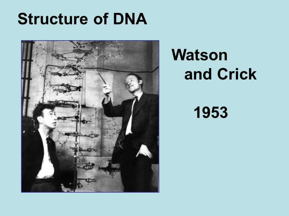Structure of DNA Watson and Crick 1953