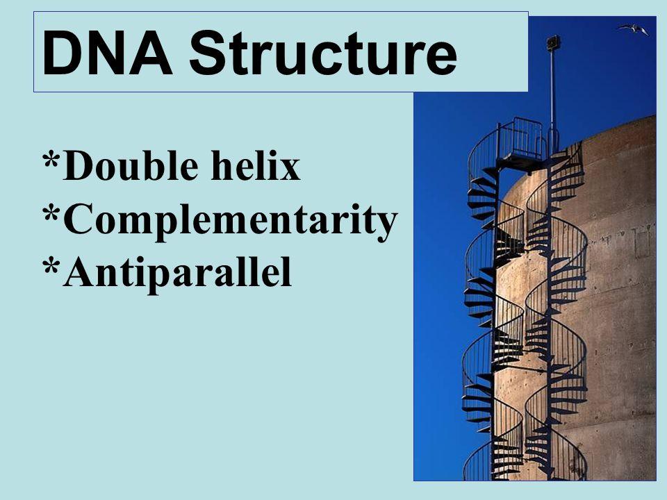 *Double helix *Complementarity *Antiparallel DNA Structure