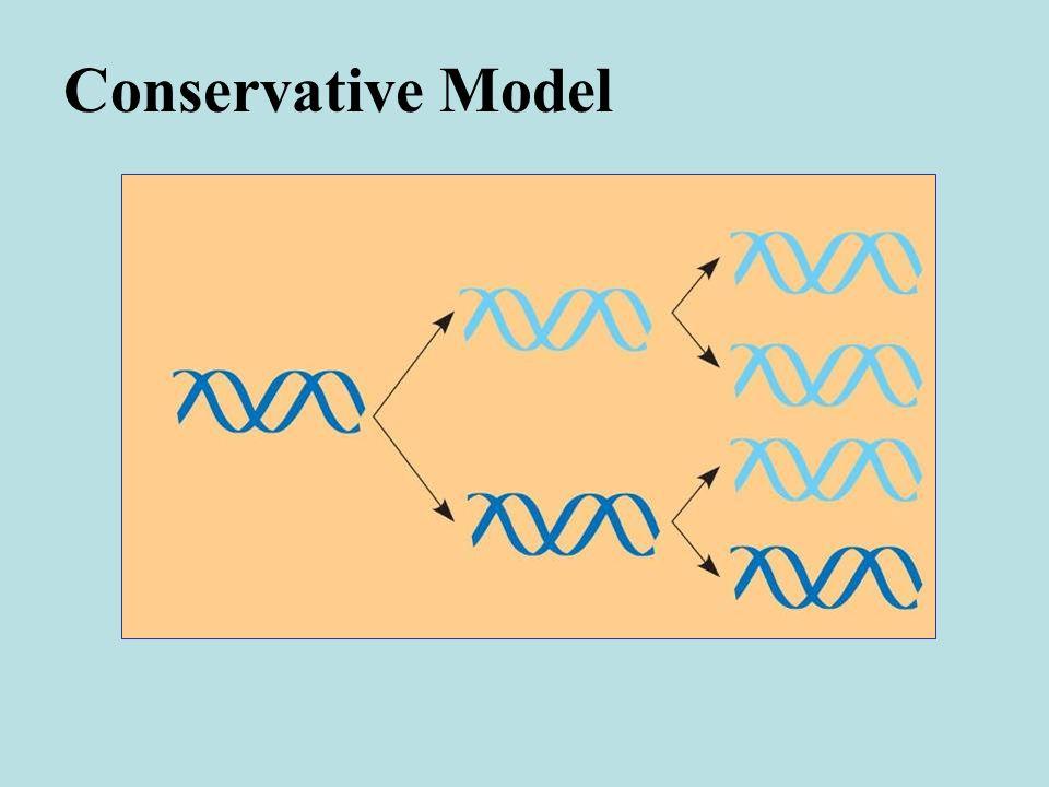 Conservative Model
