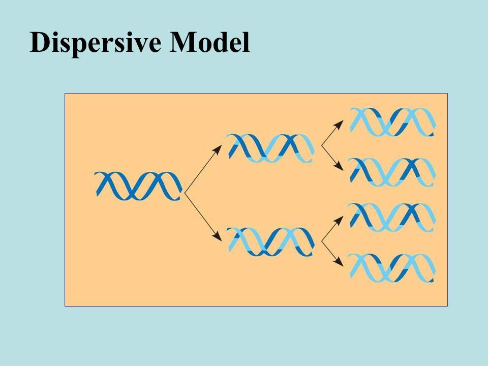 Dispersive Model