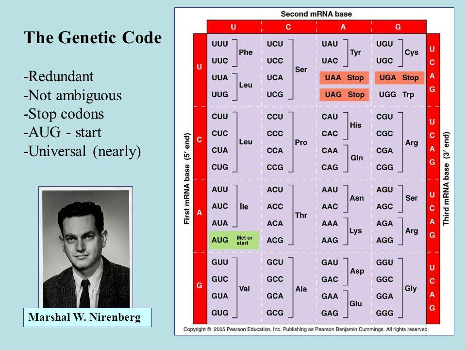 The Genetic Code -Redundant -Not ambiguous -Stop codons -AUG - start -Universal (nearly) Marshal W. Nirenberg