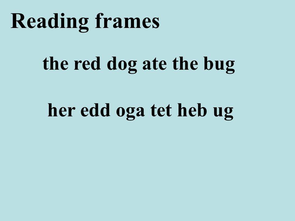 the red dog ate the bug Reading frames her edd oga tet heb ug