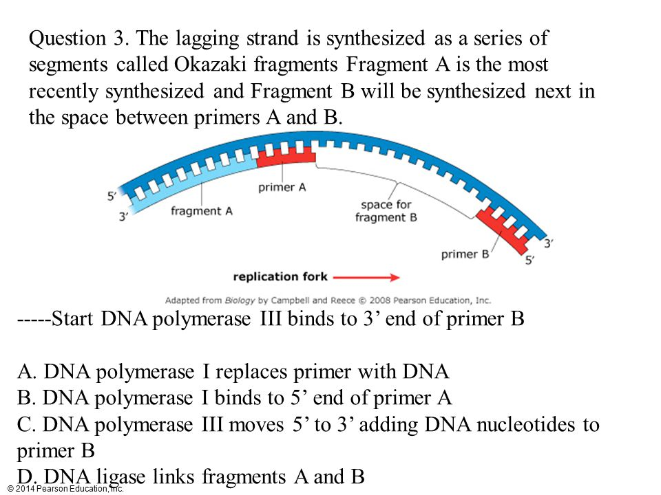 © 2014 Pearson Education, Inc. Question 3. The lagging strand is synthesized as a series of segments called Okazaki fragments Fragment A is the most r