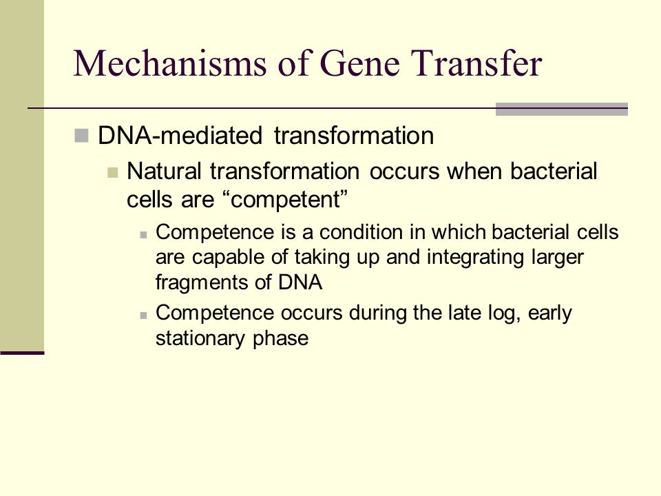 DNA-mediated transformation Natural transformation occurs when bacterial cells are competent Competence is a condition in which bacterial cells are capable of taking up and integrating larger fragments of DNA Competence occurs during the late log, early stationary phase Mechanisms of Gene Transfer