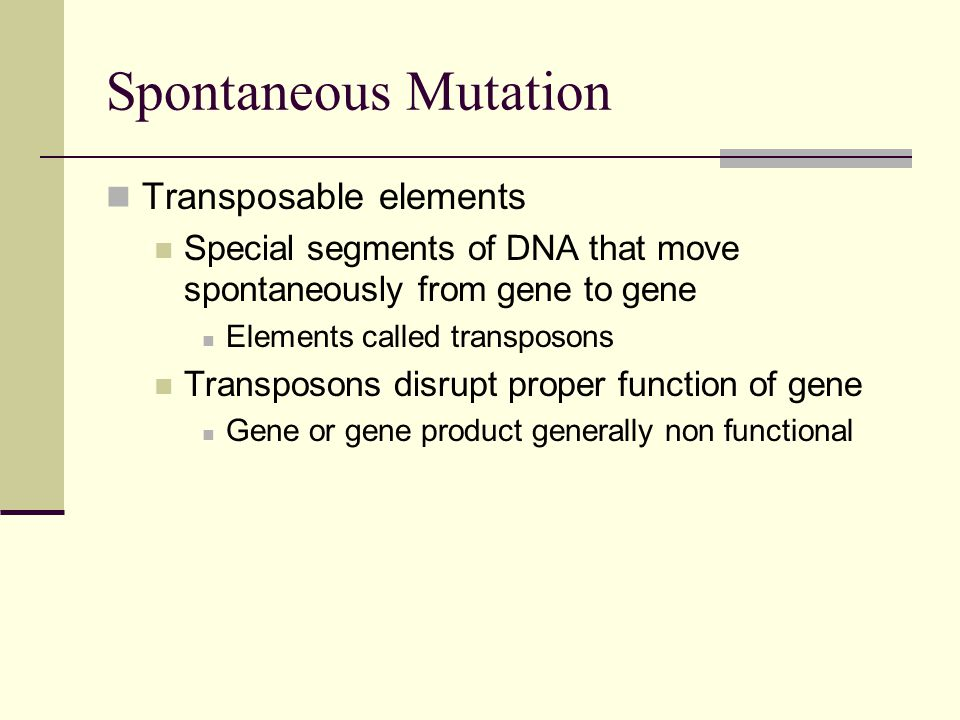 Transposable elements Special segments of DNA that move spontaneously from gene to gene Elements called transposons Transposons disrupt proper function of gene Gene or gene product generally non functional Spontaneous Mutation