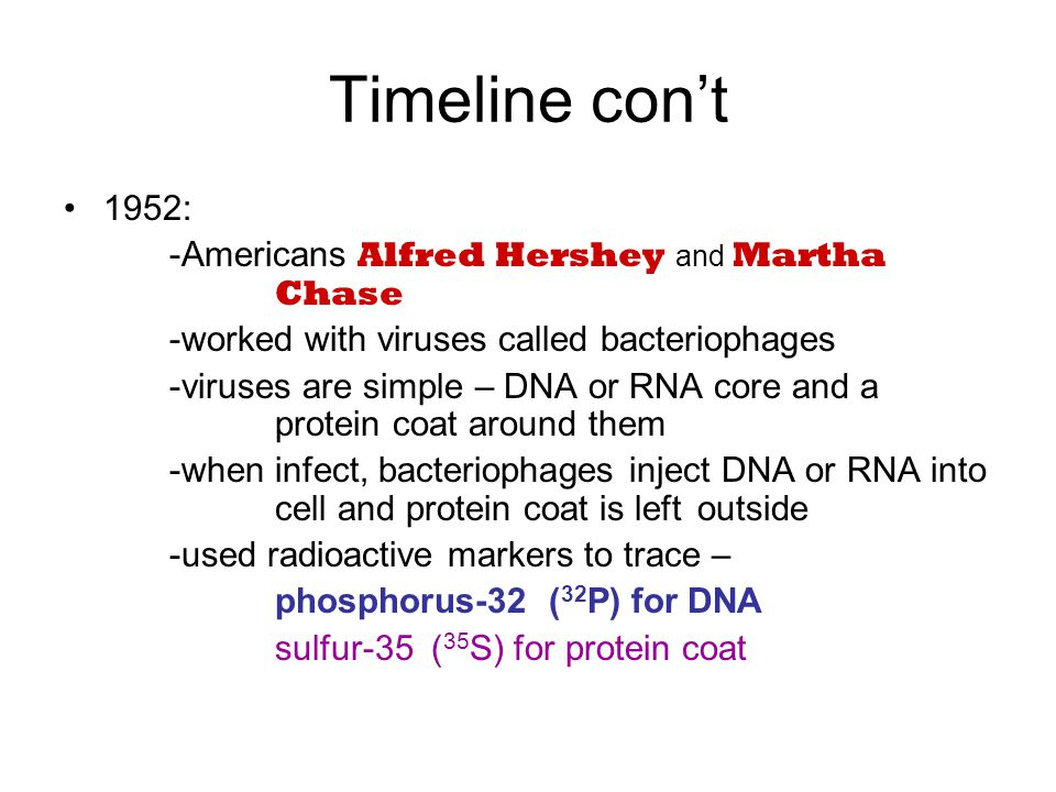 Timeline con't 1952: -Americans Alfred Hershey and Martha Chase -worked with viruses called bacteriophages -viruses are simple – DNA or RNA core and a protein coat around them -when infect, bacteriophages inject DNA or RNA into cell and protein coat is left outside -used radioactive markers to trace – phosphorus-32 ( 32 P) for DNA sulfur-35 ( 35 S) for protein coat
