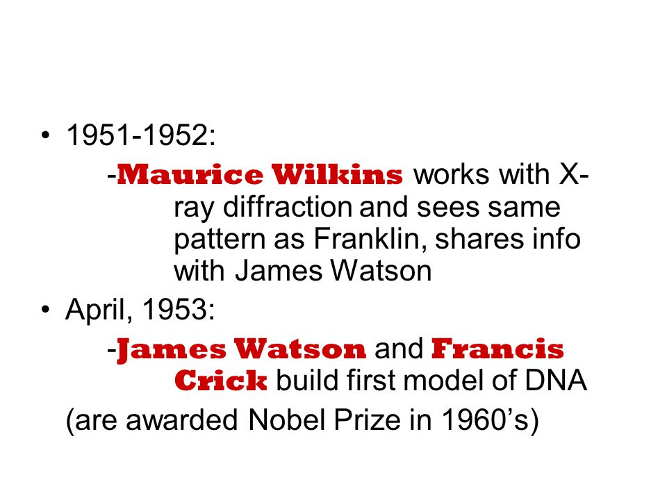 1951-1952: - Maurice Wilkins works with X- ray diffraction and sees same pattern as Franklin, shares info with James Watson April, 1953: - James Watson and Francis Crick build first model of DNA (are awarded Nobel Prize in 1960's)
