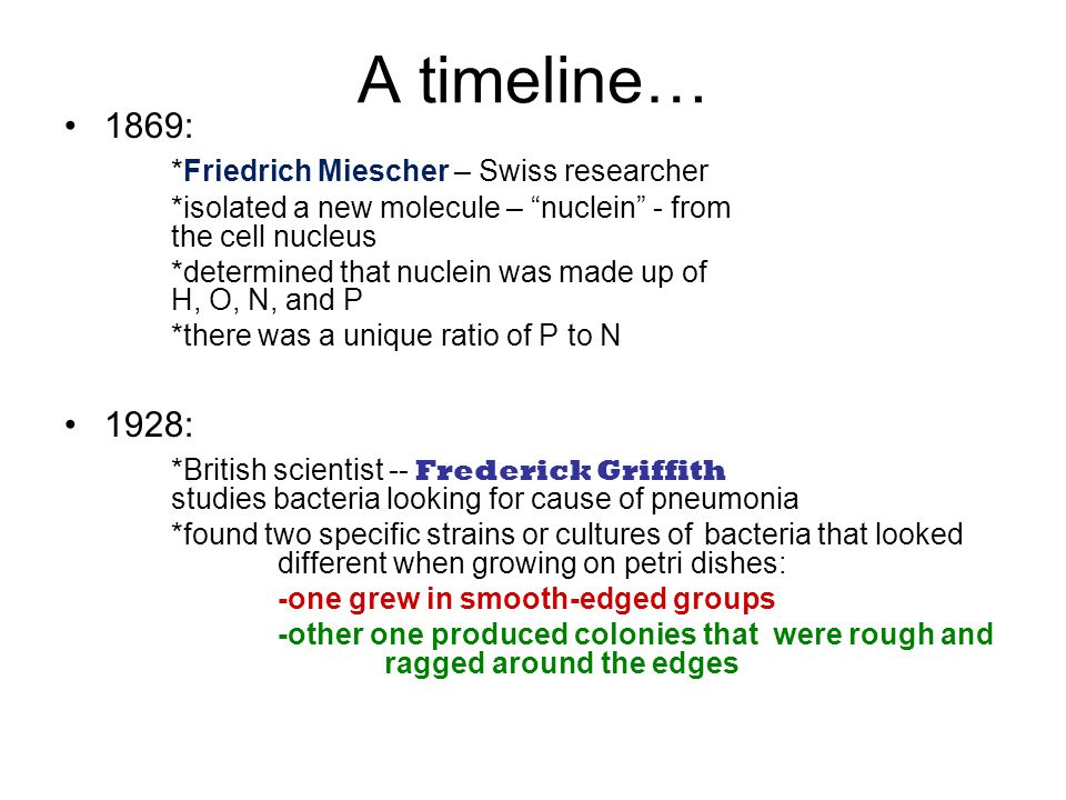A timeline… 1869: *Friedrich Miescher – Swiss researcher *isolated a new molecule – nuclein - from the cell nucleus *determined that nuclein was made up of H, O, N, and P *there was a unique ratio of P to N 1928: *British scientist -- Frederick Griffith studies bacteria looking for cause of pneumonia *found two specific strains or cultures of bacteria that looked different when growing on petri dishes: -one grew in smooth-edged groups -other one produced colonies that were rough and ragged around the edges