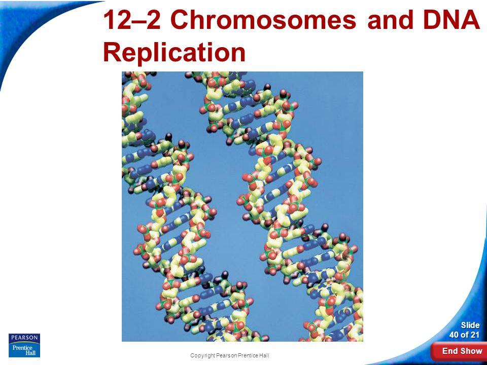 End Show Slide 40 of 21 Copyright Pearson Prentice Hall 12-2 Chromosomes and DNA Replication 12–2 Chromosomes and DNA Replication