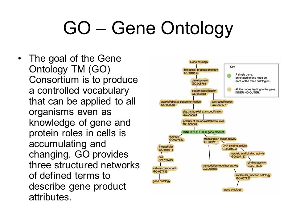 GO – Gene Ontology The goal of the Gene Ontology TM (GO) Consortium is to produce a controlled vocabulary that can be applied to all organisms even as knowledge of gene and protein roles in cells is accumulating and changing.