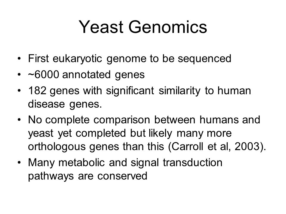 Yeast Genomics First eukaryotic genome to be sequenced ~6000 annotated genes 182 genes with significant similarity to human disease genes.