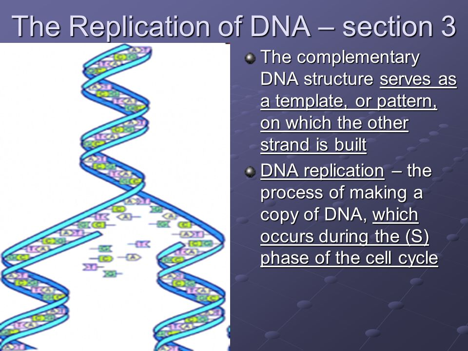 The Replication of DNA – section 3 The complementary DNA structure serves as a template, or pattern, on which the other strand is built DNA replication – the process of making a copy of DNA, which occurs during the (S) phase of the cell cycle