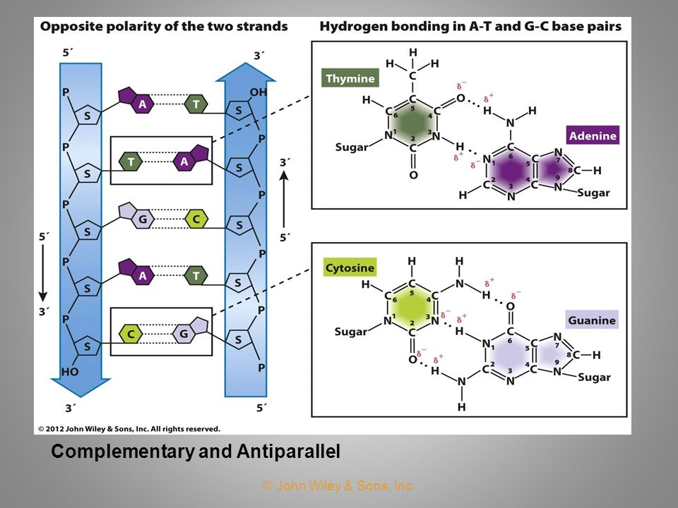 Complementary and Antiparallel