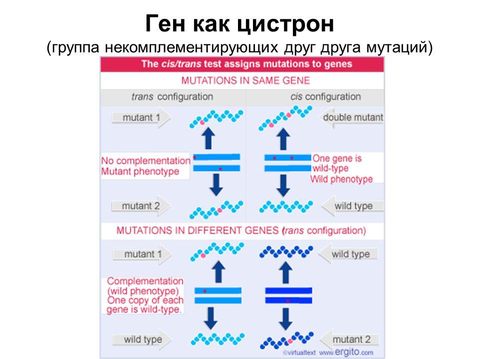 Ген как цистрон (группа некомплементирующих друг друга мутаций)