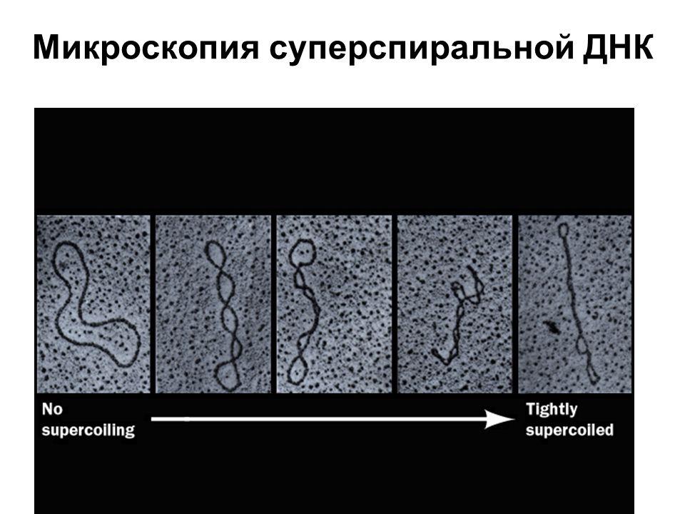 Микроскопия суперспиральной ДНК