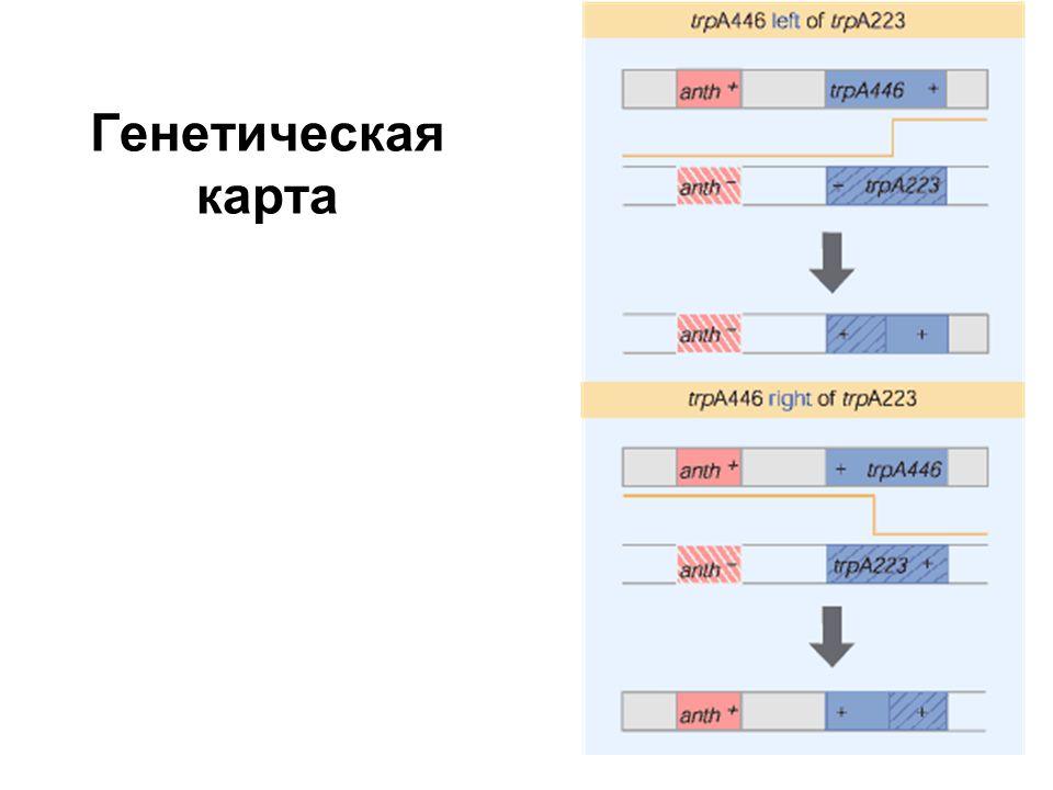 Механизм сплайсинга