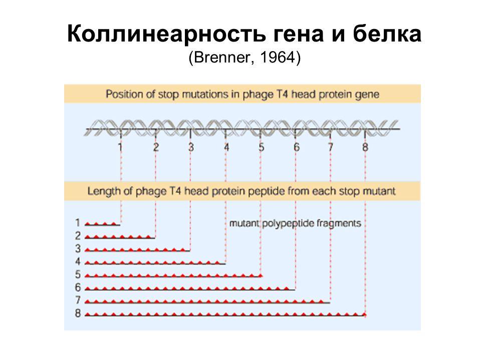 Репликация ДНК в целом